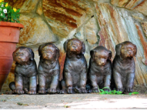 Cast Bronze Five Sitting Puppies