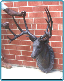Mounted Deer Head, Right or Left